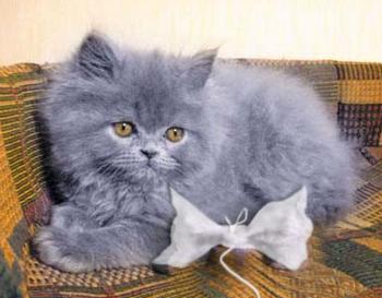 Бантик для котенка