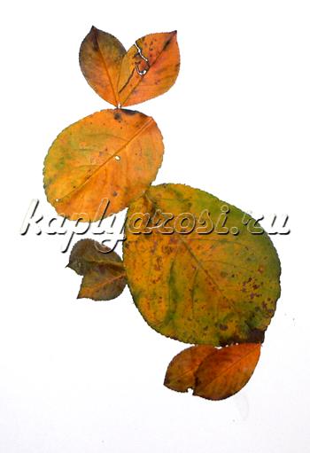 Зайчик из листьев