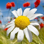 Цветы c весны до осени